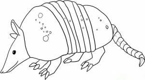 armadillo-drawing-1